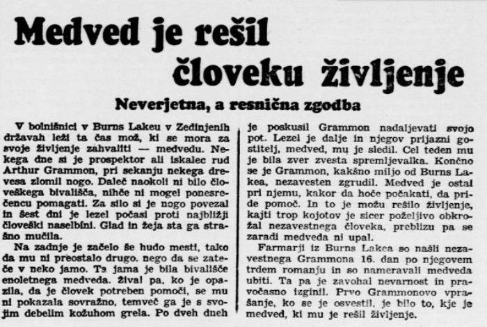 Medved je rešil človeku življenje, Jutro (02.03.1941), letnik 22, številka 52, str. 7